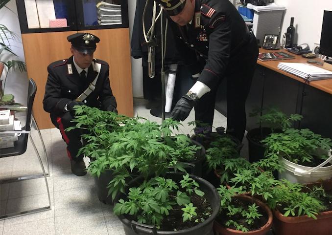 35 piante d'erba in casa, arrestato principe Odescalchi