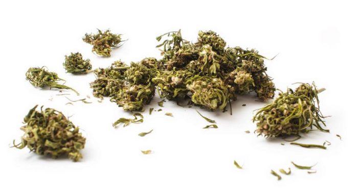 Arriva in Italia la marijuana legale che non ti fa
