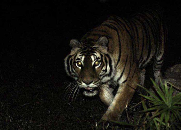 Entrano di notte al Bioparco e si fanno i selfie con gli animali