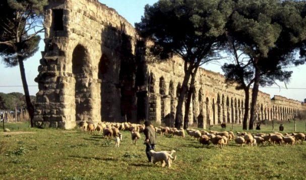 """Il Comune: """"Pecore per tosare l'erba dei parchi di Roma"""""""