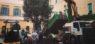 Torna la quercia in piazza della Quercia
