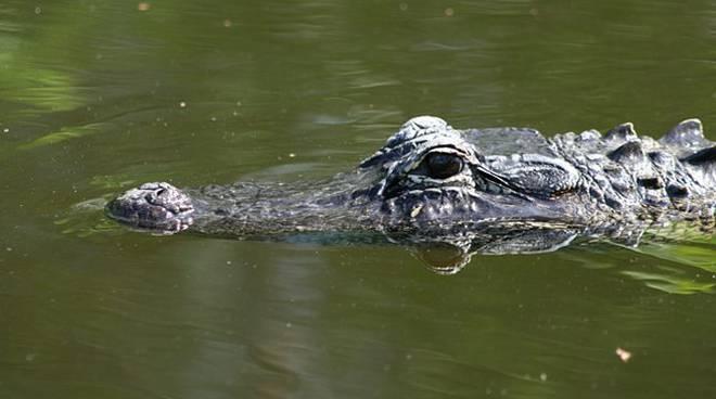 Il mistero del coccodrillo di Maccarese