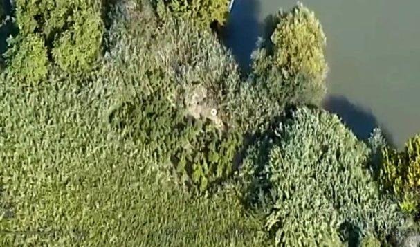 Scoperta sul Tevere piantagione segreta di marijuana